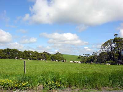 Green hills, blue sky and a bunch of black and white cows